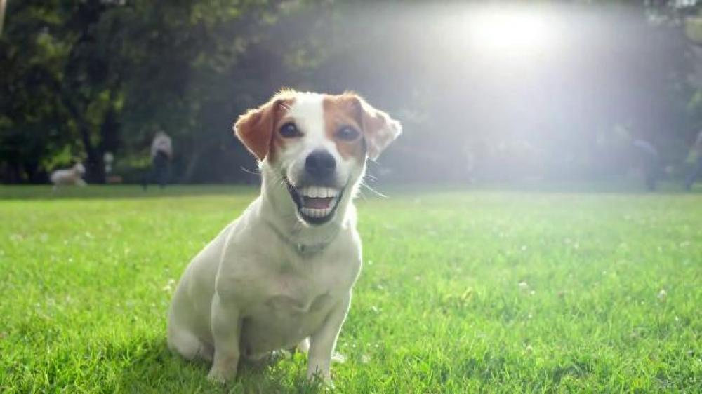 Greenies Canine promete que tu perro tenga una sonrisa hermosa