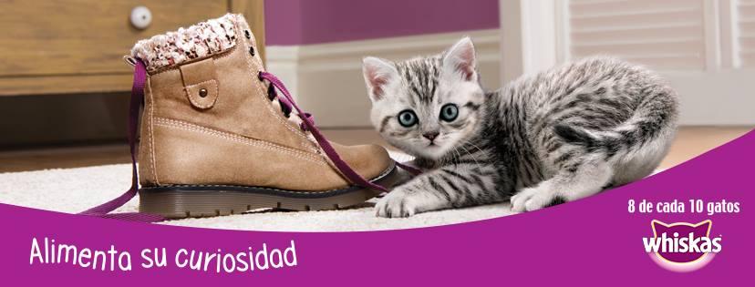 """Whiskas presenta su nueva campaña """"Alimenta su curiosidad"""""""