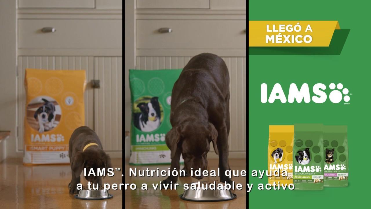 IAMS Mars llega al segmento de mercado que le faltaba llenar: el de comida Súper-Premium en canales masivos