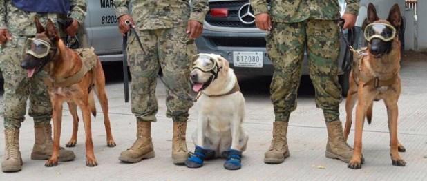 Los héroes caninos que salvaron a México